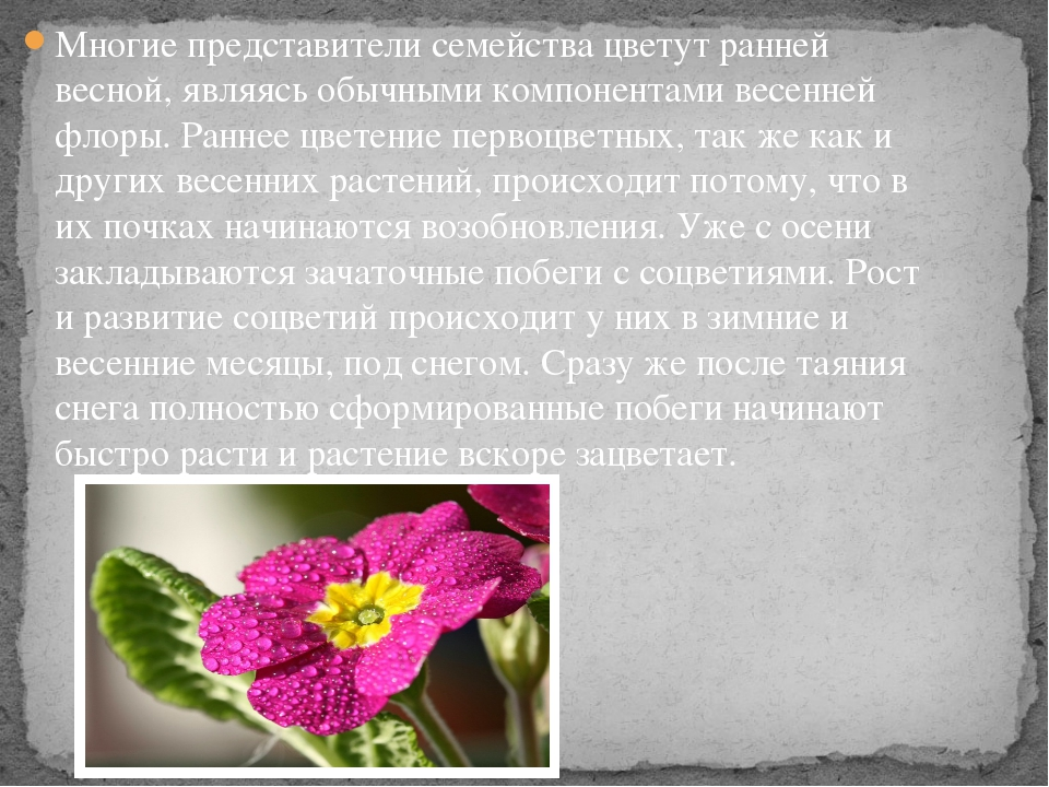 Многие представители семейства цветут ранней весной, являясь обычными компоне...