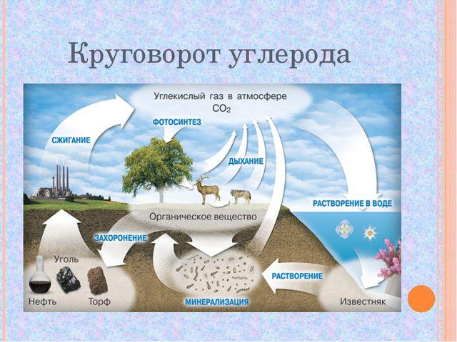 Круговорот углерода