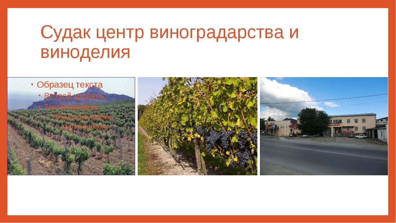 Судак центр виноградарства и виноделия