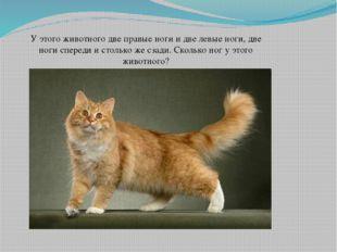 У этого животного две правые ноги и две левые ноги, две ноги спереди и столь