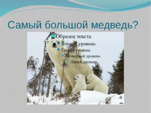 Самый большой медведь?