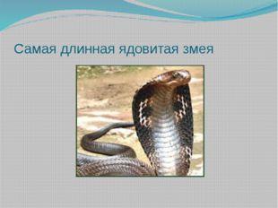 Самая длинная ядовитая змея