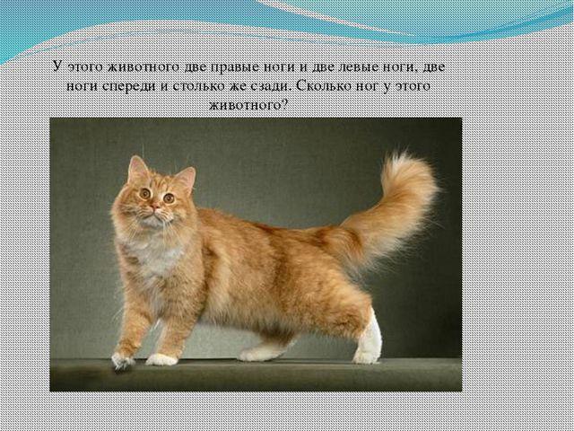 У этого животного две правые ноги и две левые ноги, две ноги спереди и столь...