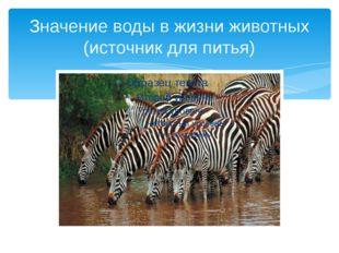 Значение воды в жизни животных (источник для питья)