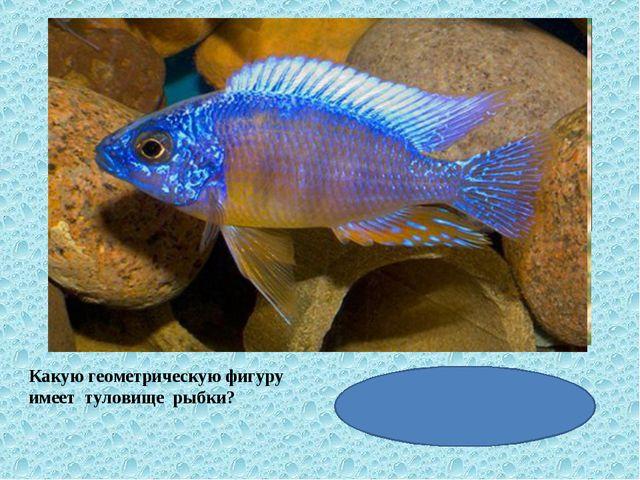 Какую геометрическую фигуру имеет туловище рыбки?
