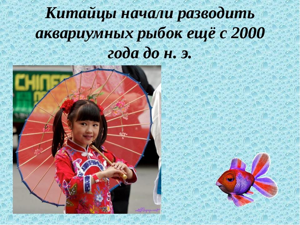 Китайцы начали разводить аквариумных рыбок ещё с 2000 года до н. э.