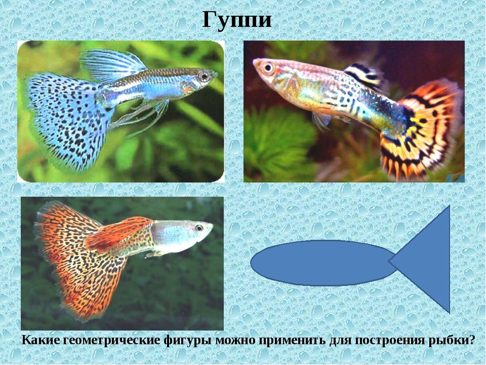 Гуппи Какие геометрические фигуры можно применить для построения рыбки?