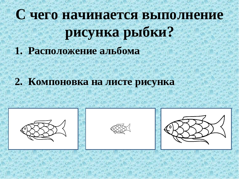 С чего начинается выполнение рисунка рыбки? Расположение альбома Компоновка н...