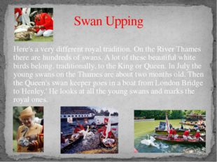 Swan Upping Here's a very different royal tradition. On the River Thames ther