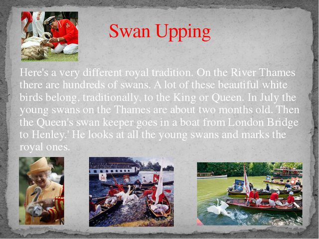 Swan Upping Here's a very different royal tradition. On the River Thames ther...