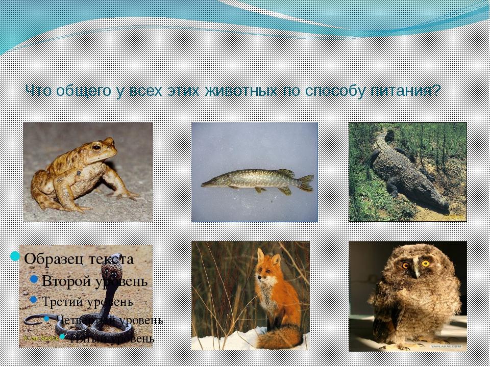 Что общего у всех этих животных по способу питания?