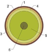 Поперечный разрез бревна, структура дерева