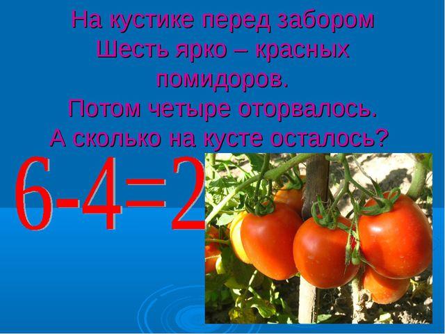 На кустике перед забором Шесть ярко – красных помидоров. Потом четыре оторвал...
