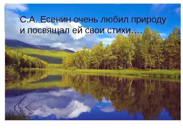 С.А. Есенин очень любил природу и посвящал ей свои стихи….