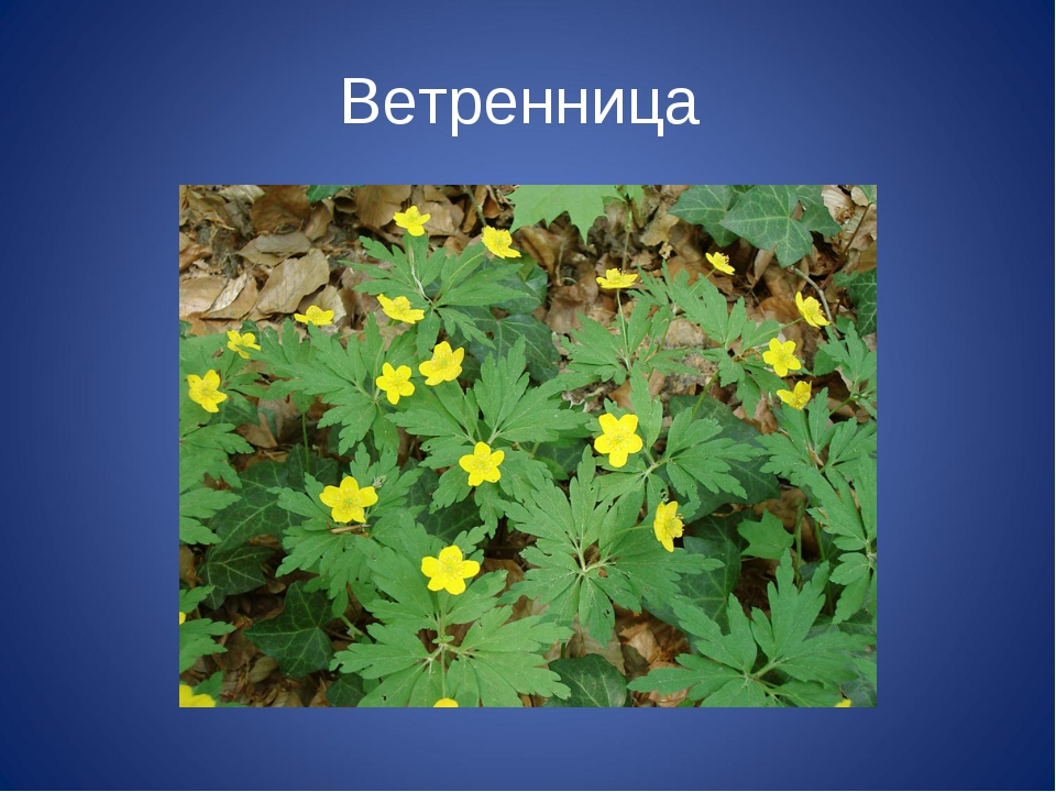 фотографии растений которые нуждаются в охране приготовлении больших
