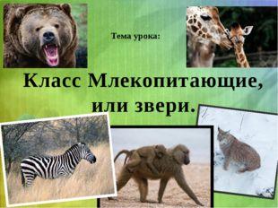 Тема урока: Класс Млекопитающие, или звери.