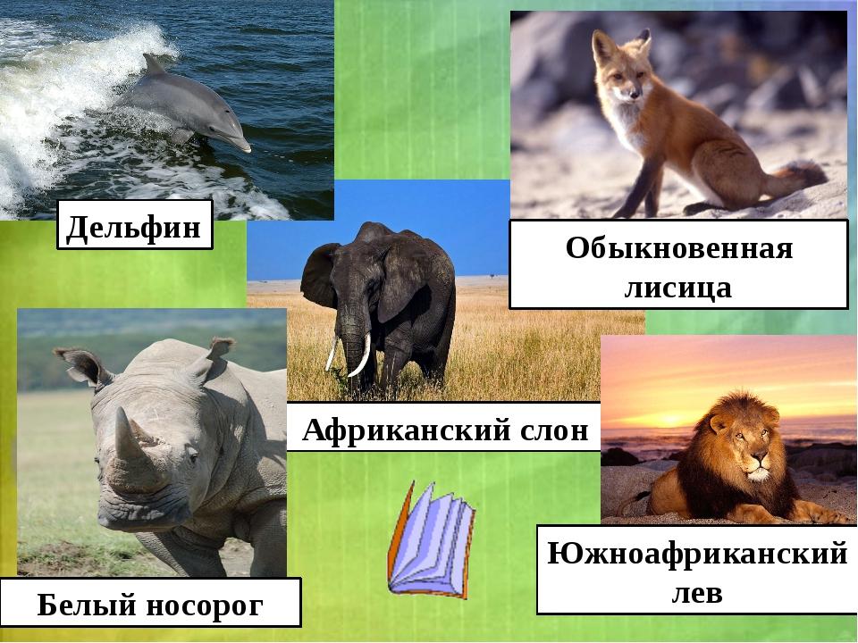 Африканский слон Обыкновенная лисица Белый носорог Дельфин Южноафриканский лев