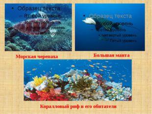 Морская черепаха Большая манта Коралловый риф и его обитатели