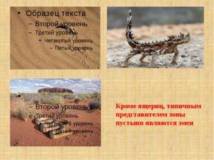 Кроме ящериц, типичным представителем зоны пустыни являются змеи