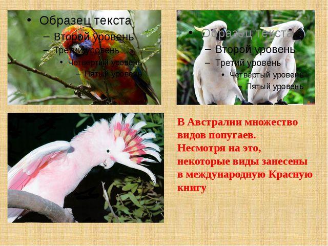 В Австралии множество видов попугаев. Несмотря на это, некоторые виды занесен...