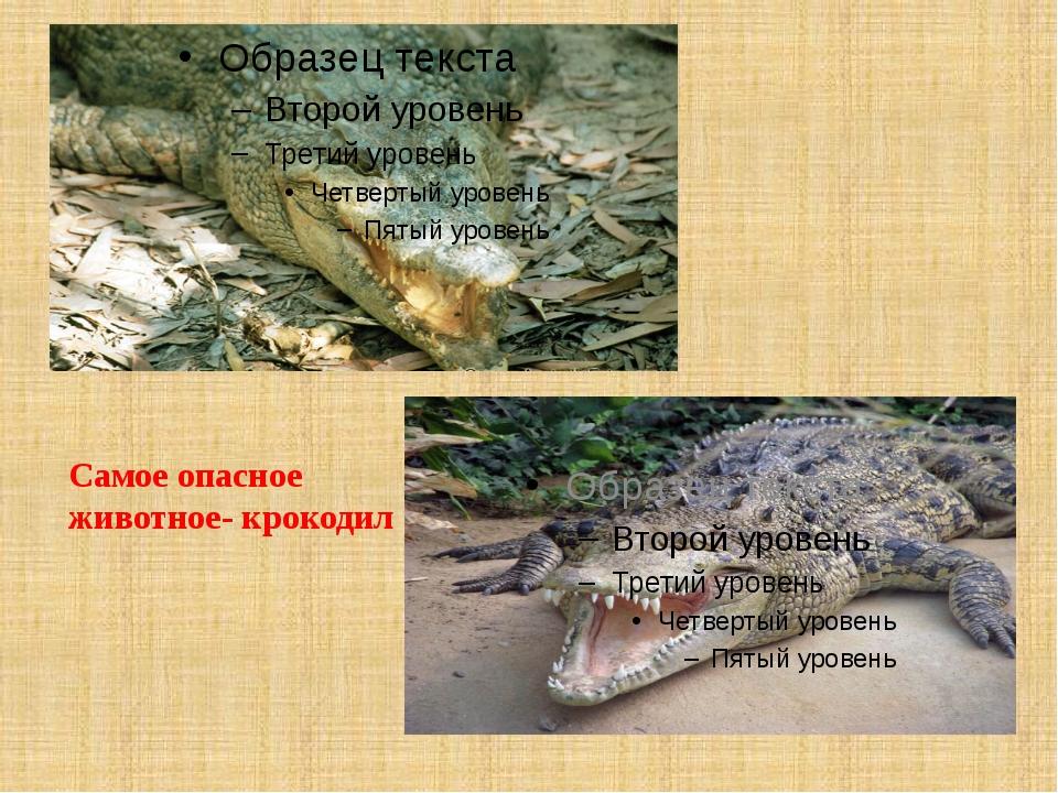 Самое опасное животное- крокодил