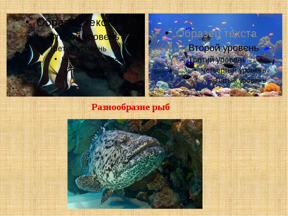 Разнообразие рыб