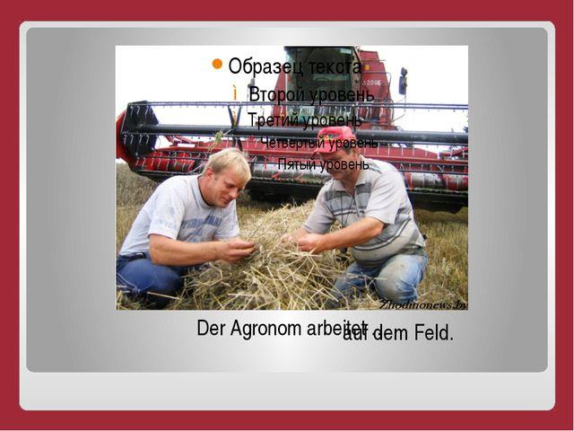 Der Agronom arbeitet … auf dem Feld.