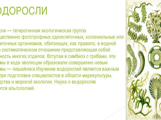 ВОДОРОСЛИ Водоросли— гетерогенная экологическая группа преимущественнофотот...