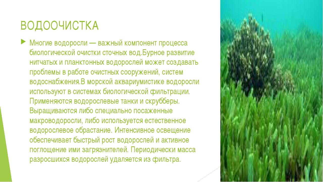ВОДООЧИСТКА Многие водоросли— важный компонент процесса биологической очистк...
