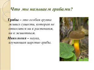 Грибы – это особая группа живых существ, которая не относится ни к растениям