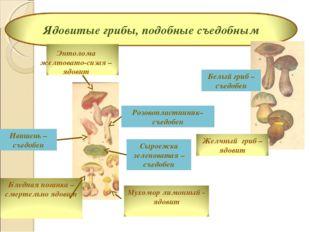 Сыроежка зеленоватая – съедобен Розовопластинник– съедобен Ивишень – съедобен