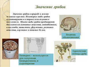Значение грибов Значение грибов в природе и жизни человека огромно. Некотор