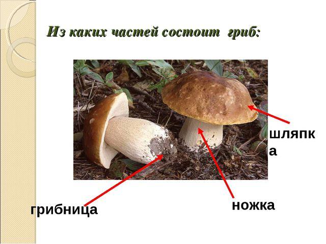 Из каких частей состоит гриб: грибница ножка шляпка