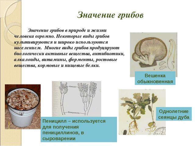 Значение грибов Значение грибов в природе и жизни человека огромно. Некотор...