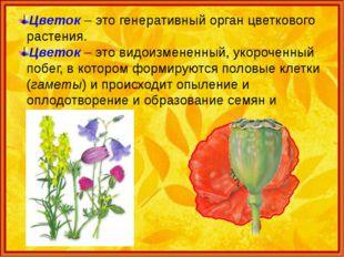 Цветок – это генеративный орган цветкового растения. Цветок – это видоизменен