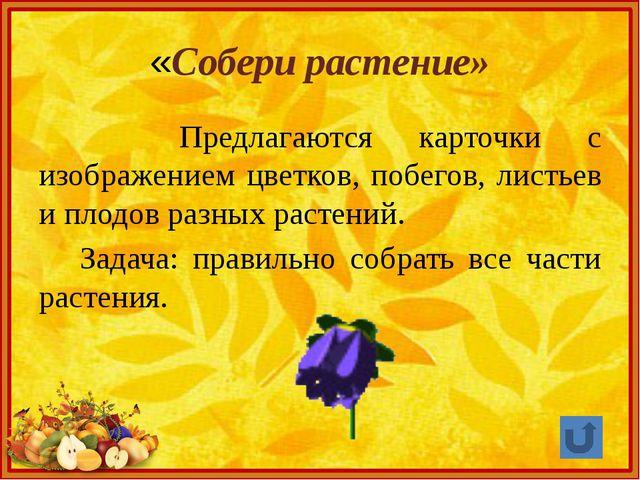 «Собери растение» Предлагаются карточки с изображением цветков, побегов, лист...