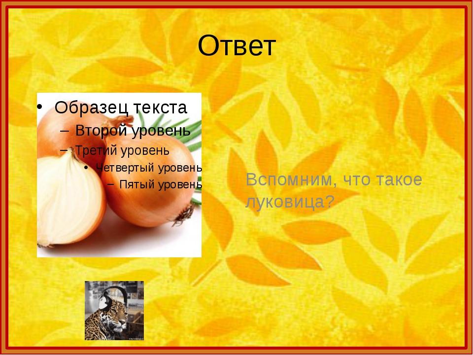 Ответ Вспомним, что такое луковица?