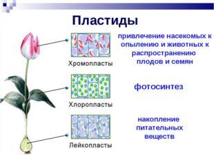 Пластиды привлечение насекомых к опылению и животных к распространению плодов