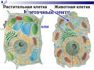 Клеточный центр Участвует в делении клетки Центриоли Растительная клетка Живо