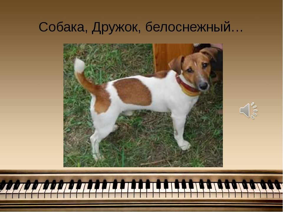 Собака, Дружок, белоснежный…