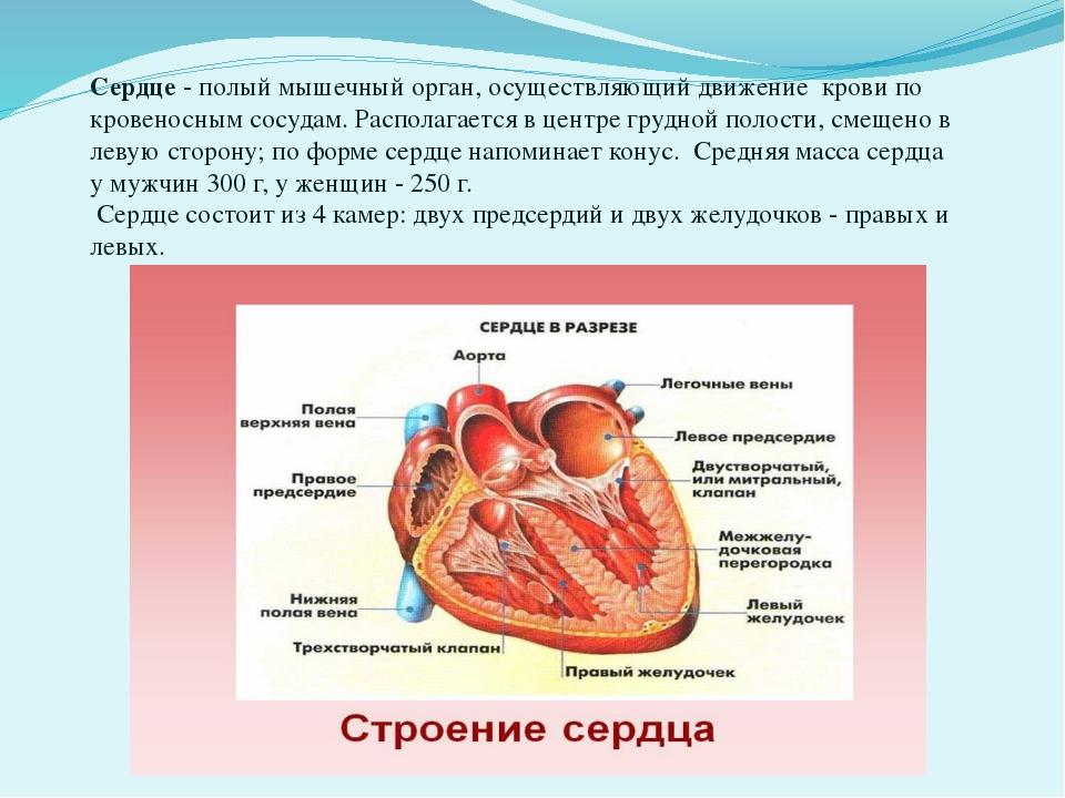 Сердце- полый мышечный орган, осуществляющий движение крови по кровеносным...