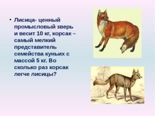 Лисица- ценный промысловый зверь и весит 10 кг, корсак – самый мелкий предста