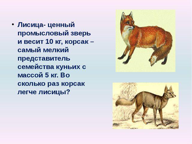 Лисица- ценный промысловый зверь и весит 10 кг, корсак – самый мелкий предста...