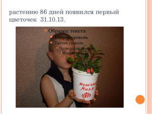 растению 86 дней появился первый цветочек 31.10.13.