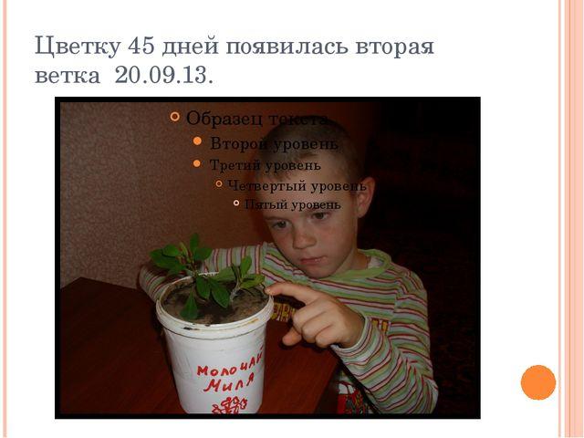 Цветку 45 дней появилась вторая ветка 20.09.13.