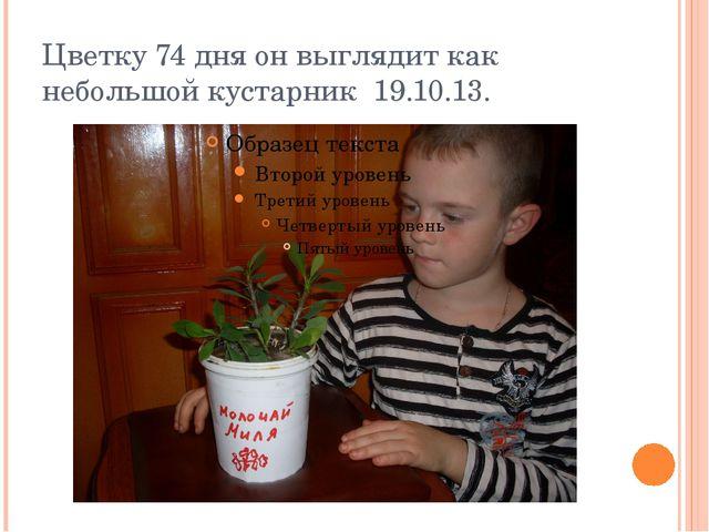 Цветку 74 дня он выглядит как небольшой кустарник 19.10.13.
