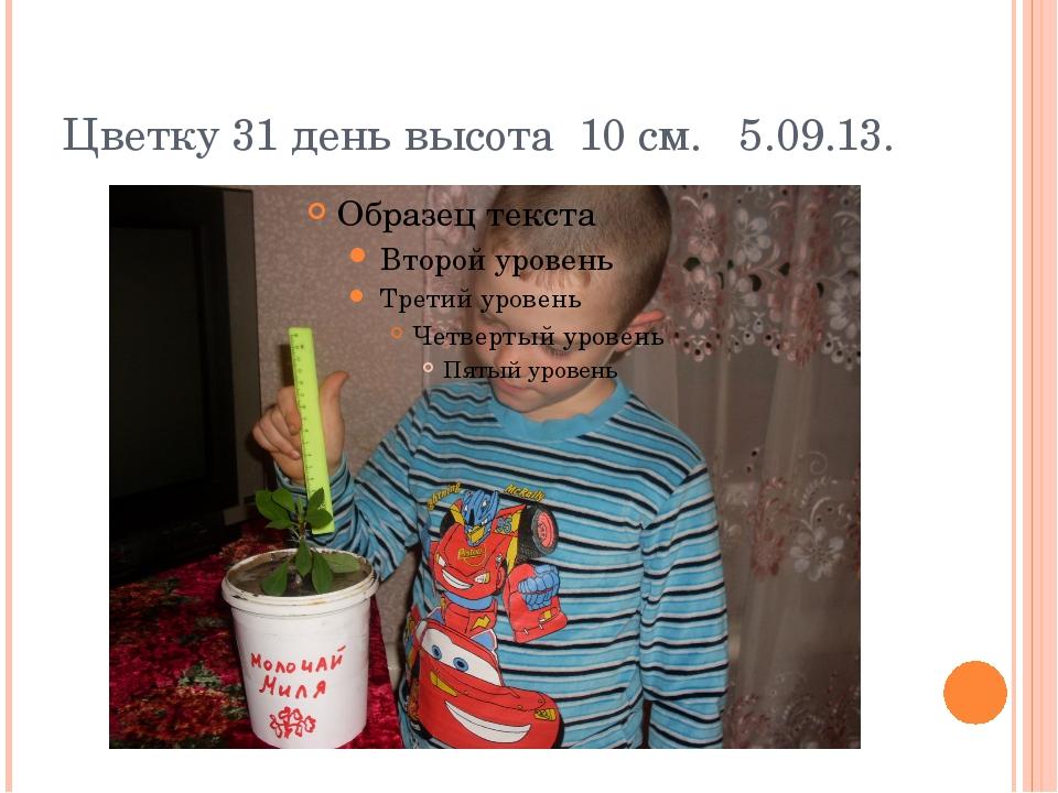 Цветку 31 день высота 10 см. 5.09.13.