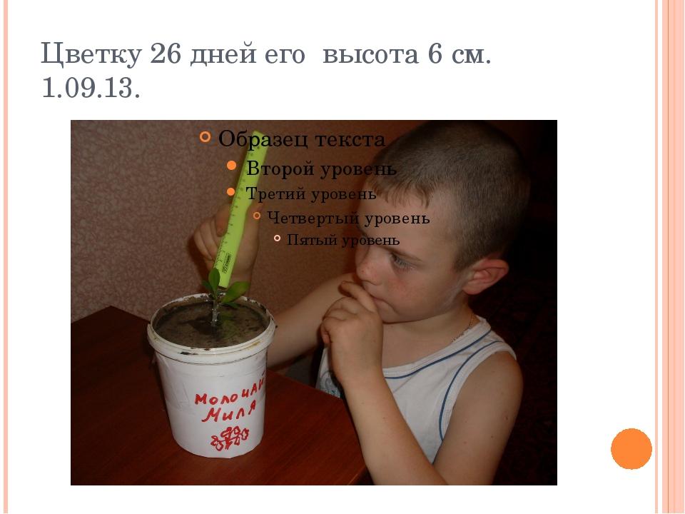 Цветку 26 дней его высота 6 см. 1.09.13.