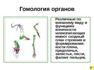 Гомология органов Различные по внешнему виду и функциям конечности млекопитаю