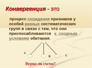 Конвергенция - это процесс схождения признаков у особей разных систематически